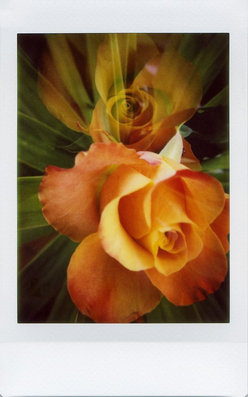 Lomo'Instant Automat Glass Tipp: Flower Power