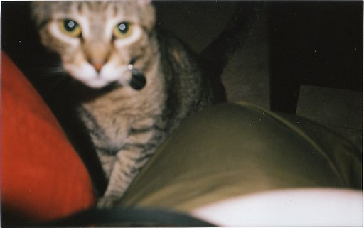 What I discovered about my Lomography