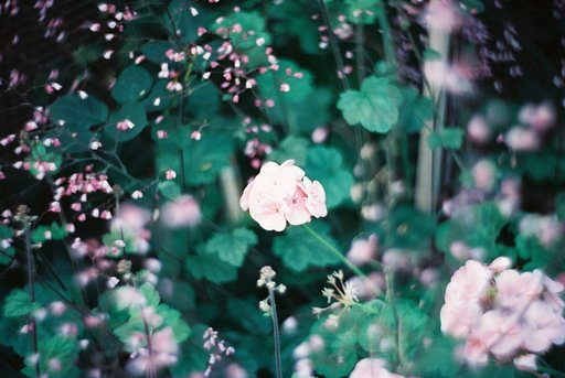 Awesome Albums: Petzval Flower Portraits by antiox