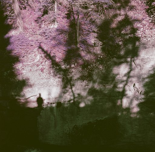 Annie Forrest's Eerie Postcards From the Yukon With the Lomochrome Purple