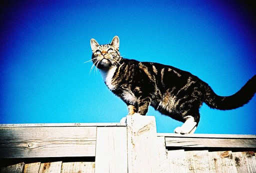 29 Pensive Cat Portraits Taken Using the Lomo LC-A Cameras