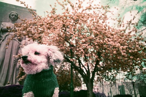 An Everyday Walk in Lomochrome Purple With Scott Crary