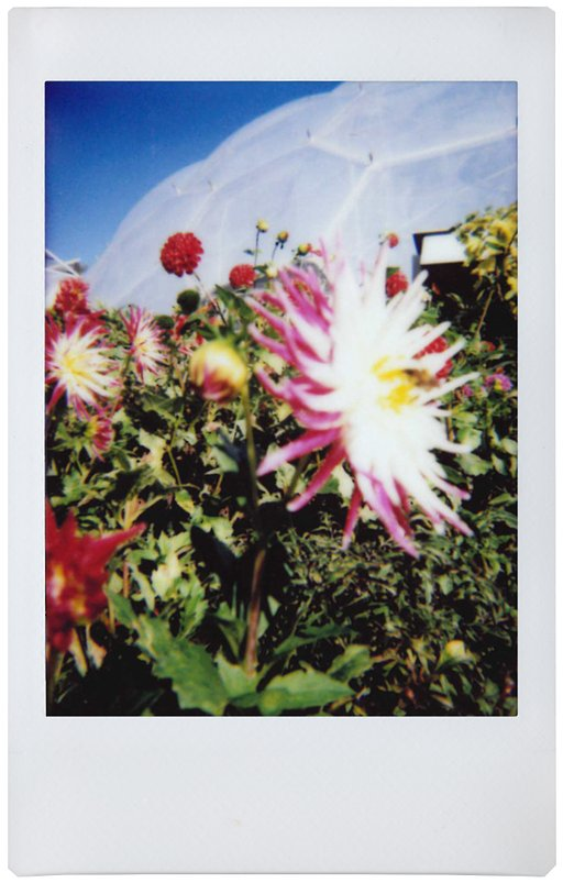 Shooting the Eden Project with the Lomo'Instant Automat
