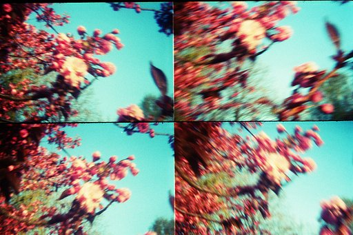 The year I got seriously involved...with Lomography
