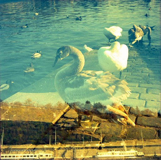 Lomography Guide to Prague: The Swan River