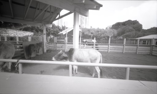 Taking your Pinhole Camera Somewhere Unexpected: the Zoo