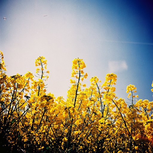 Lomography Benelux x Hoxton: After work Diana F+ workshop