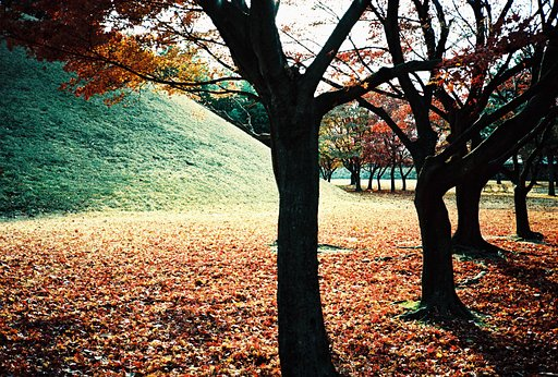 Autumn Leaves All Around: Add Some Colors into Your Lomographs