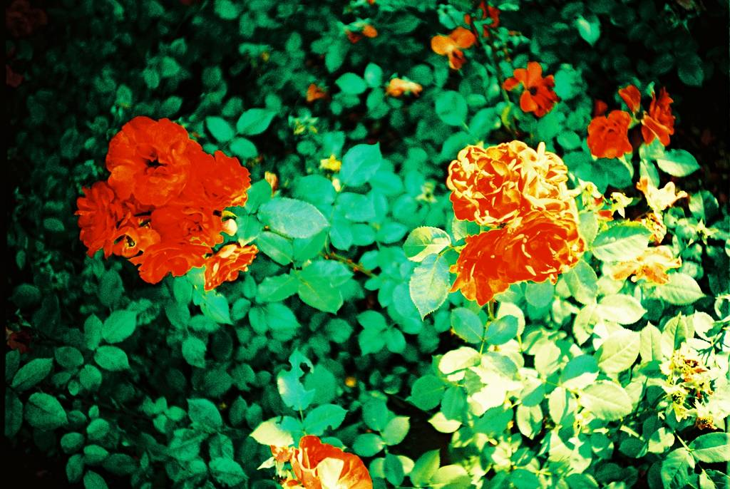 In Full Bloom: The Mysterious Flowers