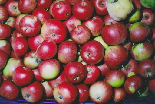 My Autumn Story: Harvesting Apples, Pears, and Other Fruits