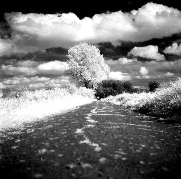 Konica Infrared 750nm: Perfect Film for Infrared Photography Beginners