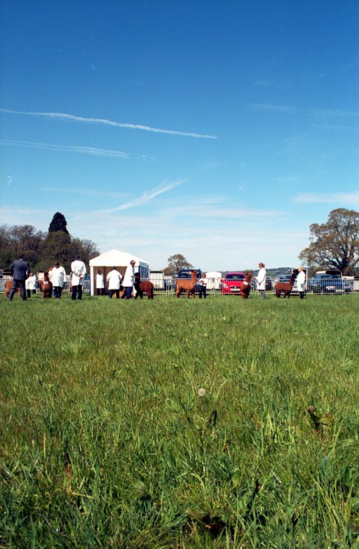 Fun Under the Sun: Sunshine, Queues and Cows – Lomography at a British County Show