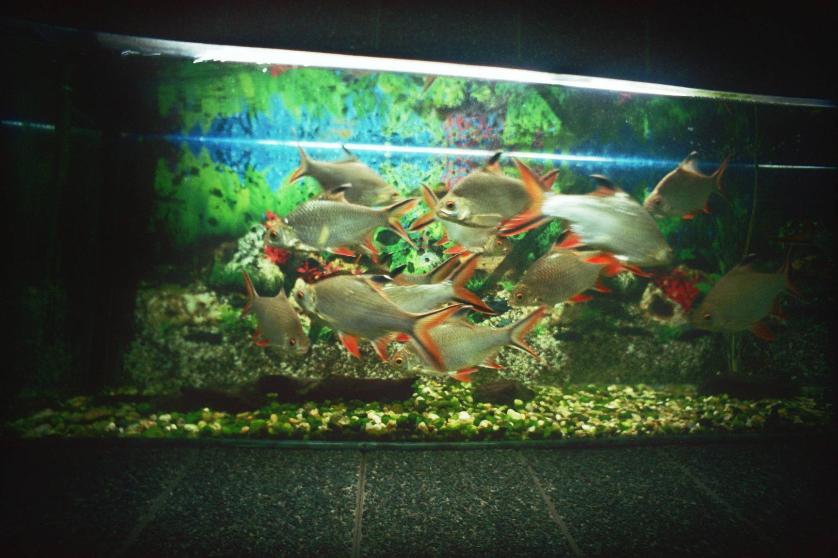 The Constanta Aquarium A Great Place To Relax Lomography