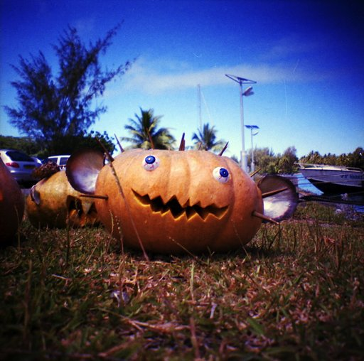 Special Feature: Lomo In the Home Halloween Callout