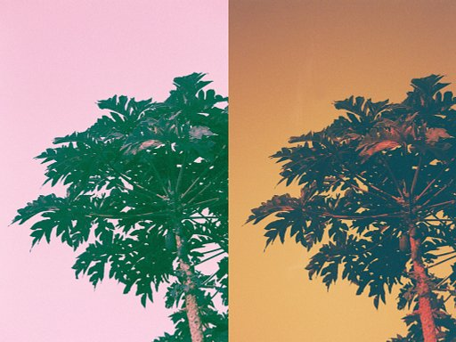 【如何比 Purple 更 Purple?!】小編對比實測 Redscale 及 LomoChrome Purple 菲林反面的效果