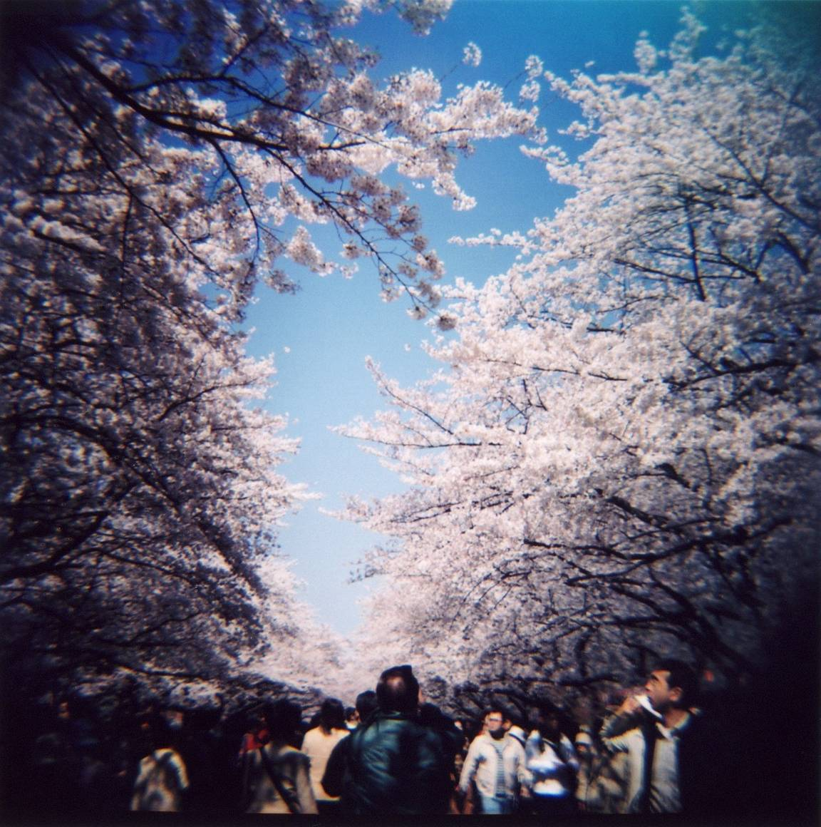 My First Date with the Diana F+: @orangebird