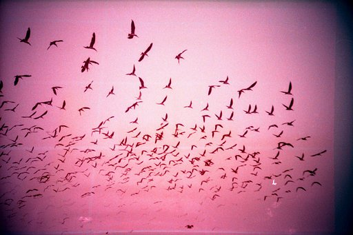 Twosday Tuesday: Birds Flying Across the Pink-Tinted Sky