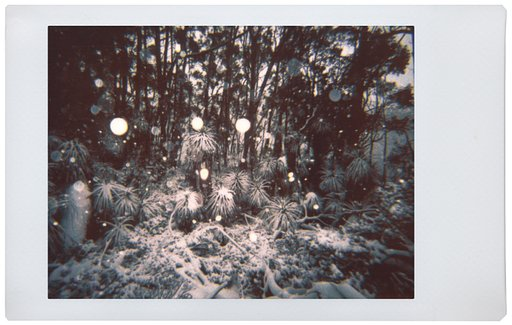 Joe Nigel Coleman: Tasmania and the Mojave Desert with the Lomo'Instant