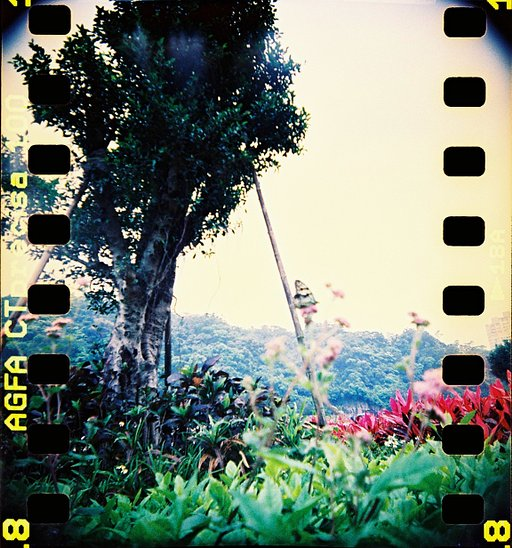 Vintage blue: Agfa CT Precisa 100 Expired