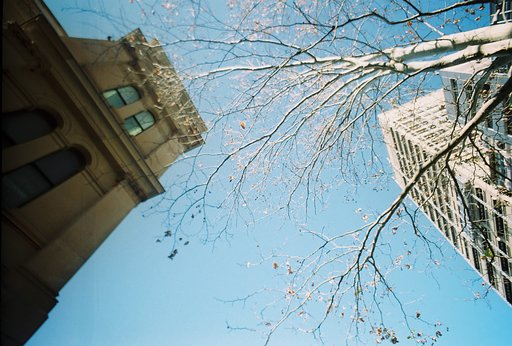Autumn Leaves All Around: A LomoWalk in Sydney