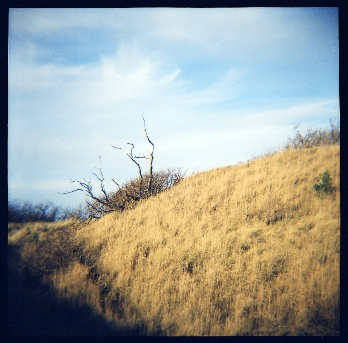 Experiments in Cross Scanning - Scanning Tutorial · Lomography