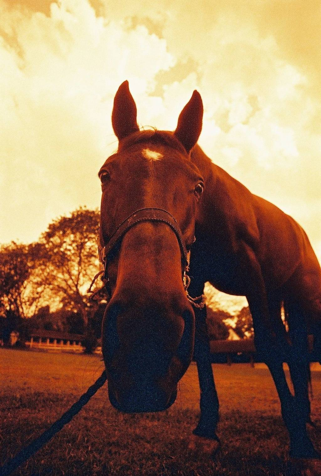 My Analogue Days: Giving the Gift of Redscale