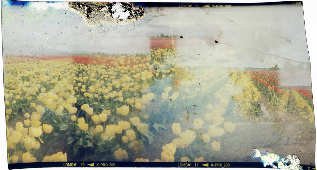 Tipster: How to Create Truly Painterly Images Out of Unwanted Negatives
