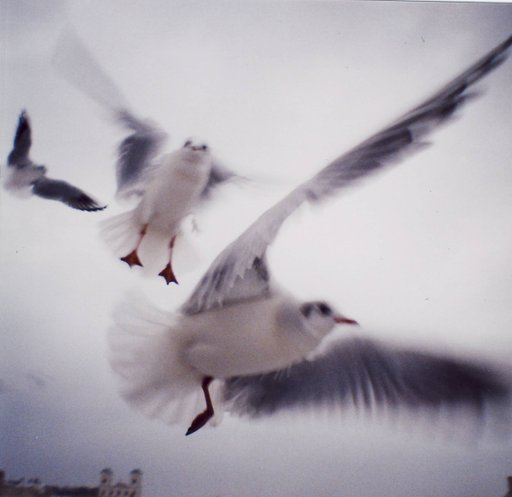 Take stunning pictures of sea gulls!