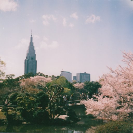 Shinjuku Park in full bloom: A perfect time to use expired films and travel to the past!