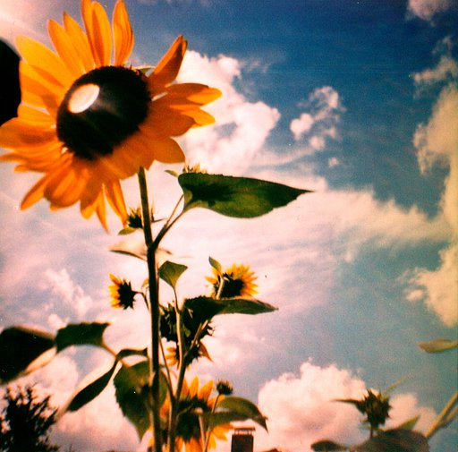 August Workshops im Lomography Gallery Store Berlin