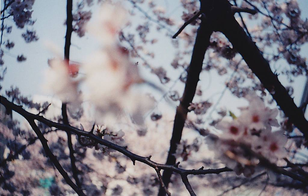 Lomo In-Depth: Beauty in Imperfection