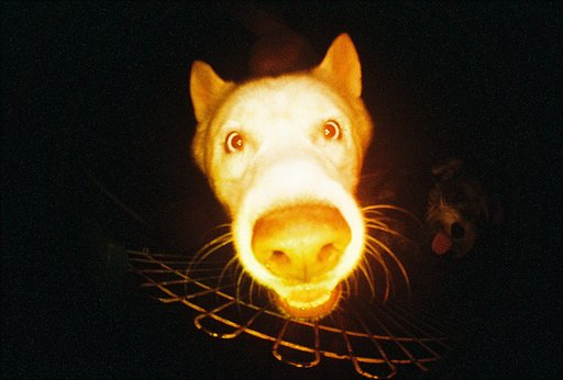 The Lomography Hipshot Showdown: This is My Silly Pet