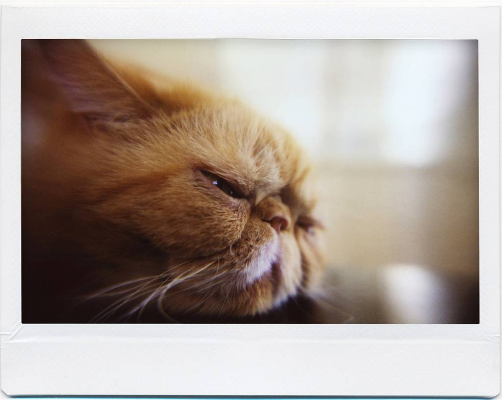 Lomo'Instant Wide Gallery: Close Up Lens Attachment