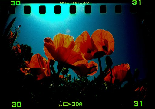 Diana F+: One of the Absolute Best In Any Format