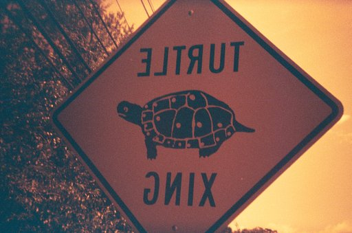 Turtle Xing on Turtle Day!