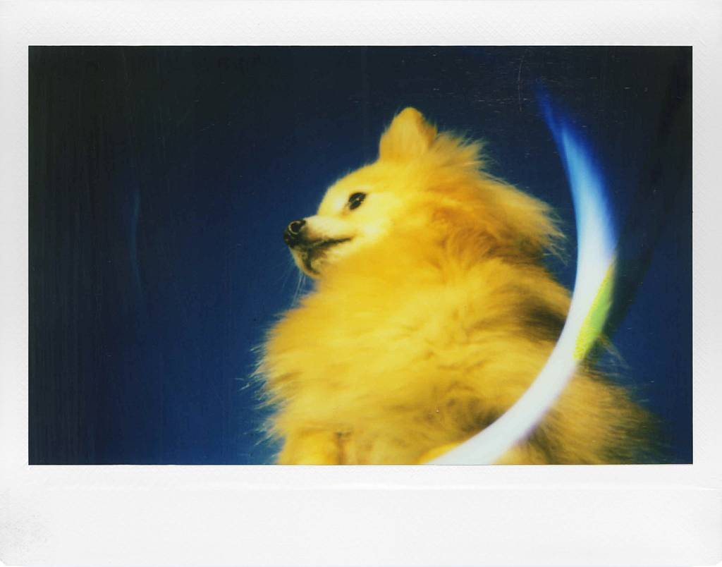 Let's Be Honest – the Lomo'Instant Wide Will Capture Your Life, a Review by @dlgv