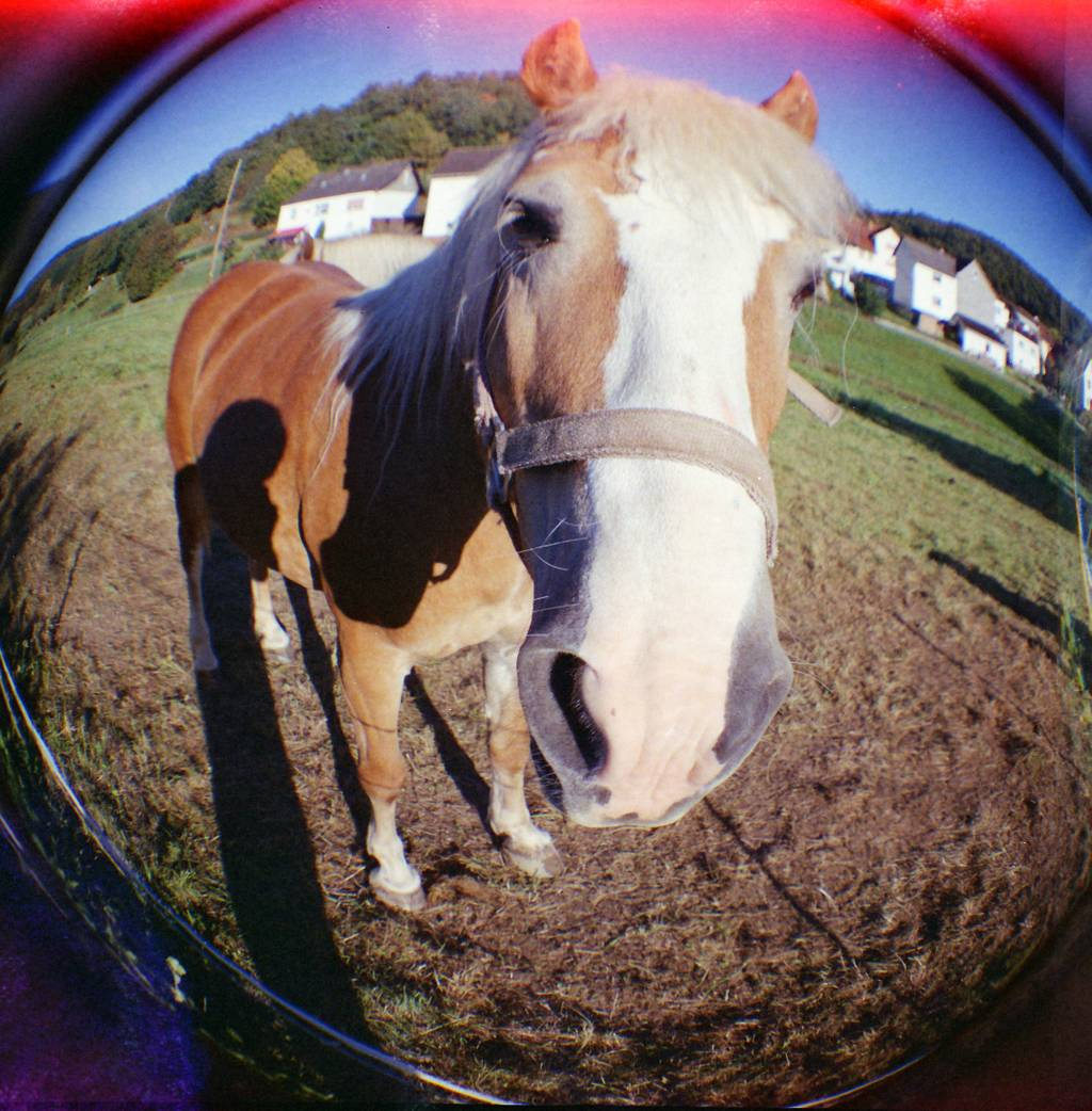 Diana F+ was my first love